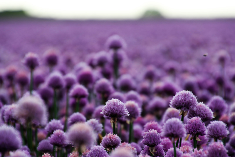 purple flowers, Occupational Therapy, Kalamazoo, MI